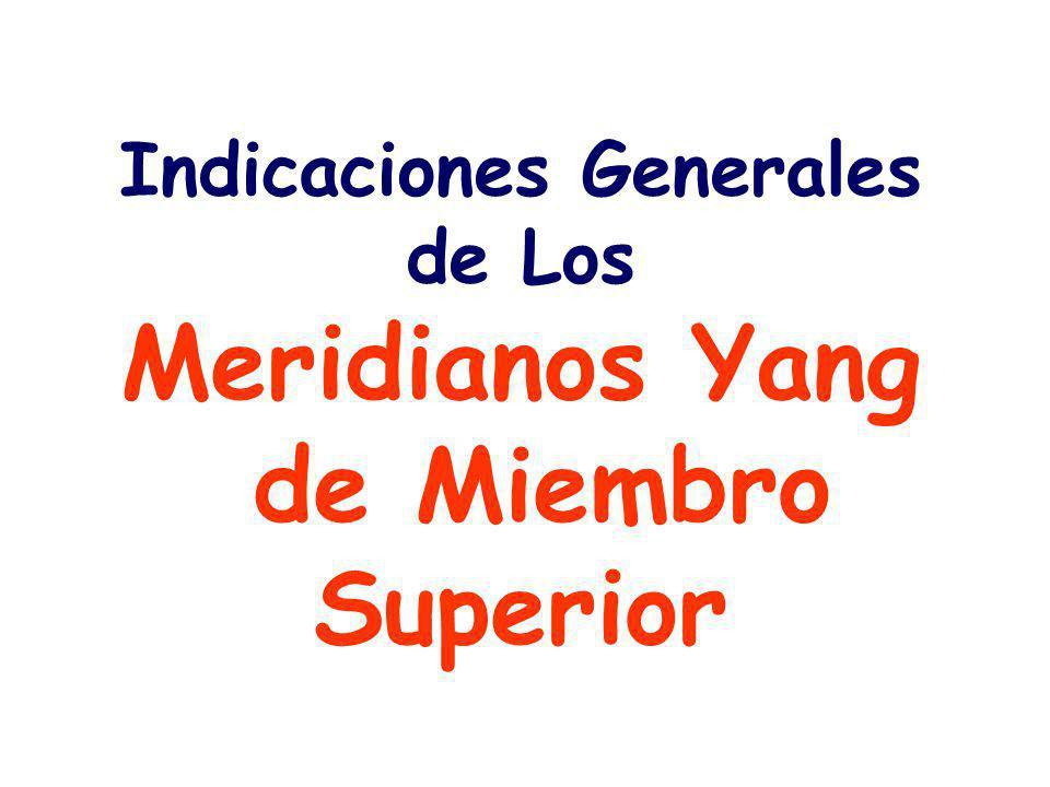 Indicaciones Generales de Los Meridianos Yang de Miembro Superior