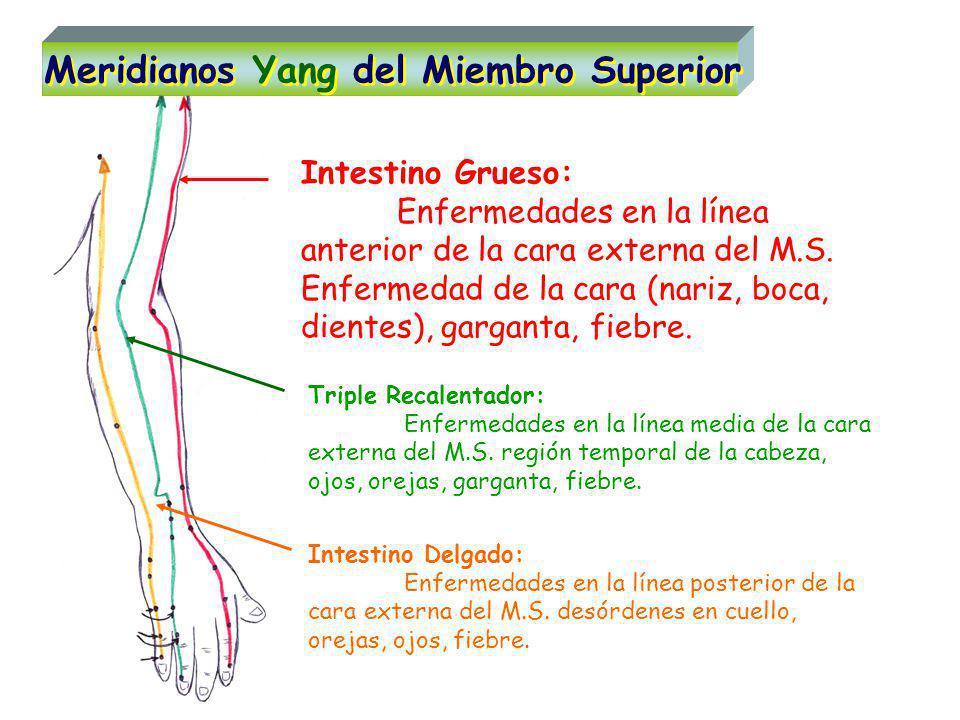 Intestino Grueso: Enfermedades en la línea anterior de la cara externa del M.S.