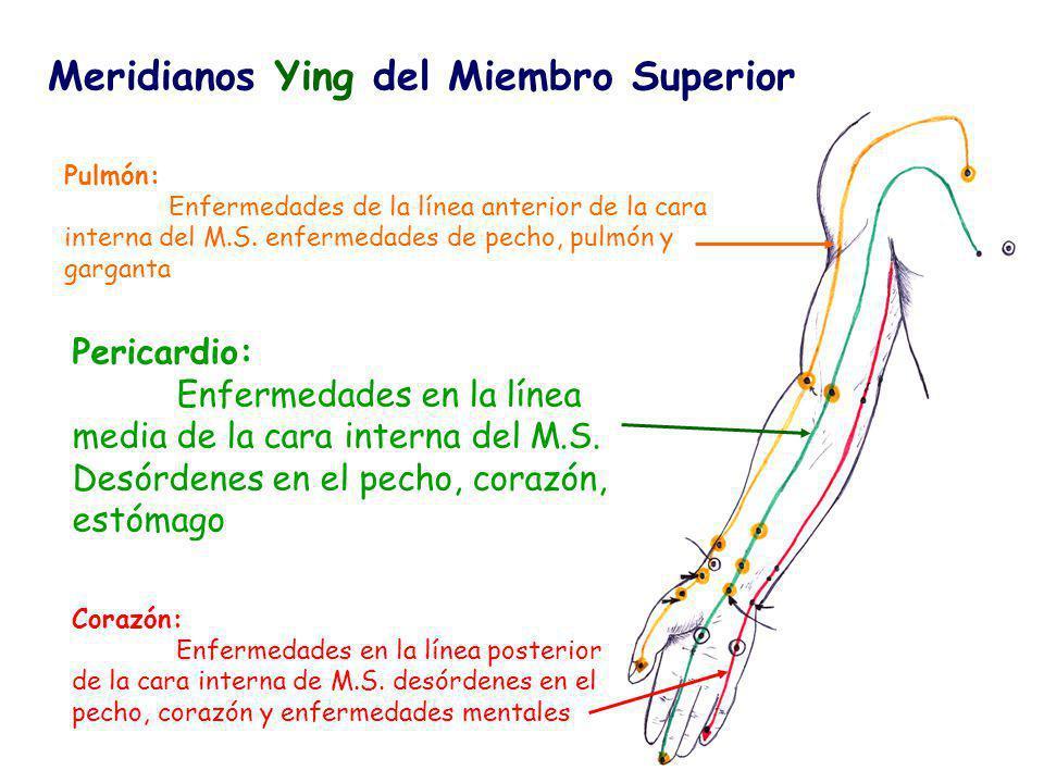 Meridianos Ying del Miembro Superior Pulmón: Enfermedades de la línea anterior de la cara interna del M.S.
