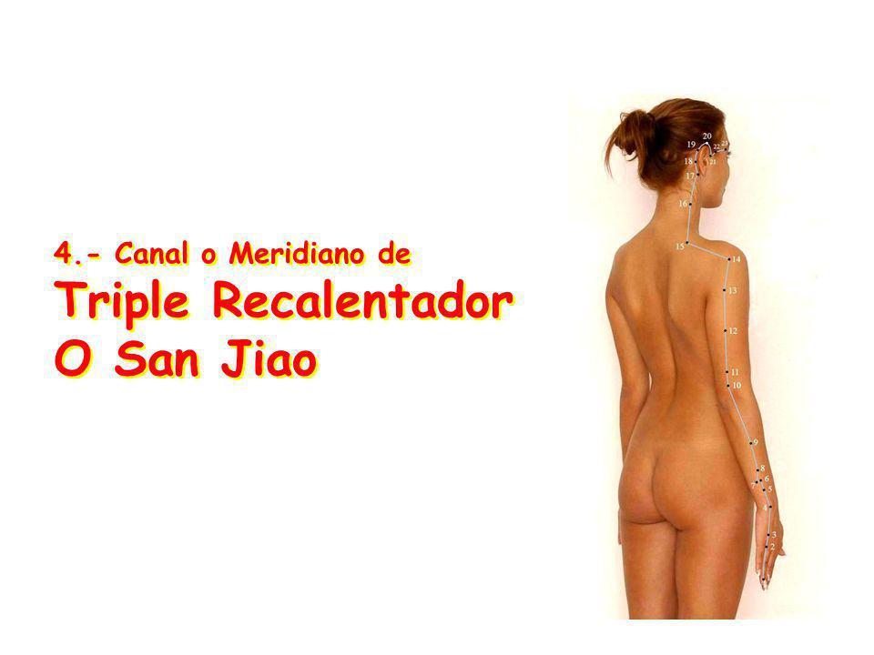4.- Canal o Meridiano de Triple Recalentador O San Jiao 4.- Canal o Meridiano de Triple Recalentador O San Jiao