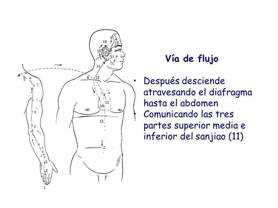Vía de flujo Después desciende atravesando el diafragma hasta el abdomen Comunicando las tres partes superior media e inferior del sanjiao (11)