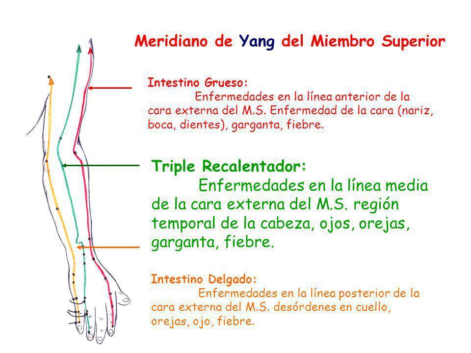 Meridiano de Yang del Miembro Superior Intestino Grueso: Enfermedades en la línea anterior de la cara externa del M.S.