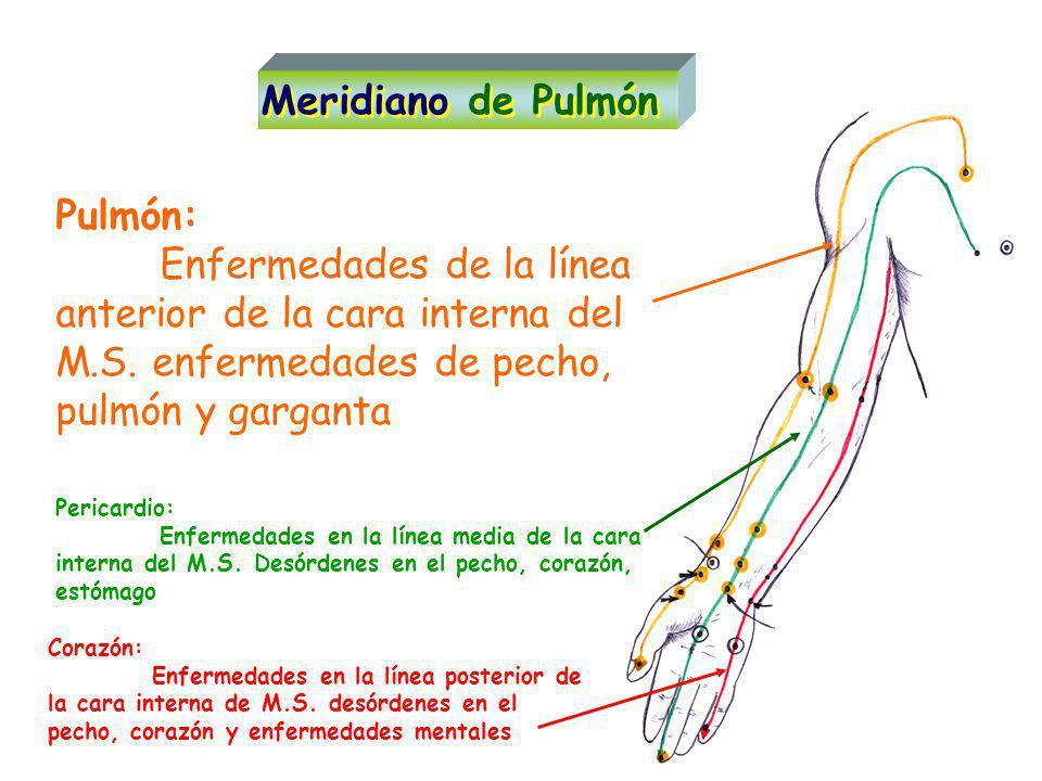 Pulmón: Enfermedades de la línea anterior de la cara interna del M.S.