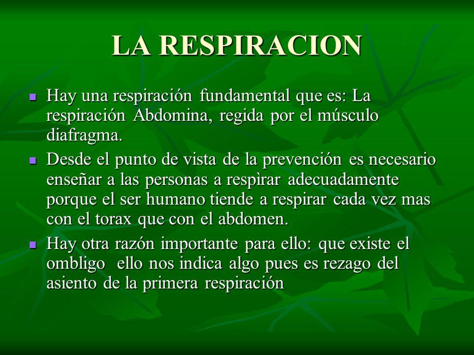 LA RESPIRACION Hay una respiración fundamental que es: La respiración Abdomina, regida por el músculo diafragma. Hay una respiración fundamental que e