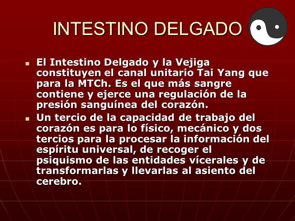 INTESTINO DELGADO El Intestino Delgado y la Vejiga constituyen el canal unitario Tai Yang que para la MTCh. Es el que más sangre contiene y ejerce una