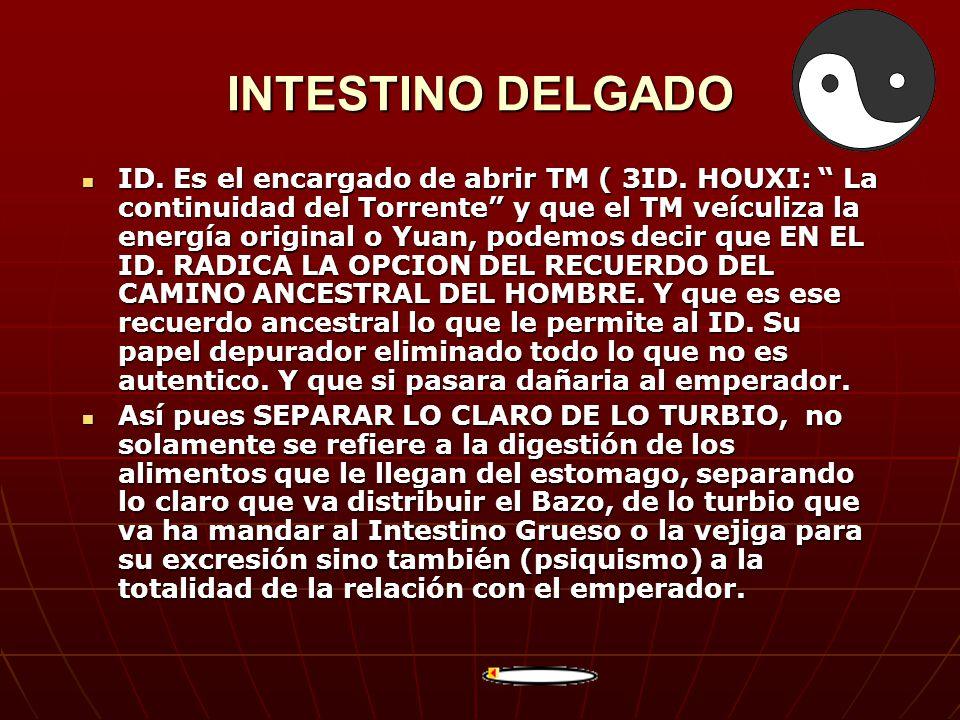 INTESTINO DELGADO ID. Es el encargado de abrir TM ( 3ID. HOUXI: La continuidad del Torrente y que el TM veículiza la energía original o Yuan, podemos