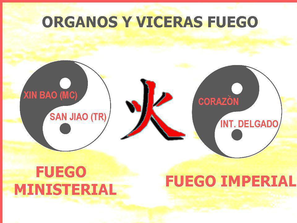FUNCIONES DEL MAESTRO DEL CORAZÓN (XIN BAO) no es un órgano.