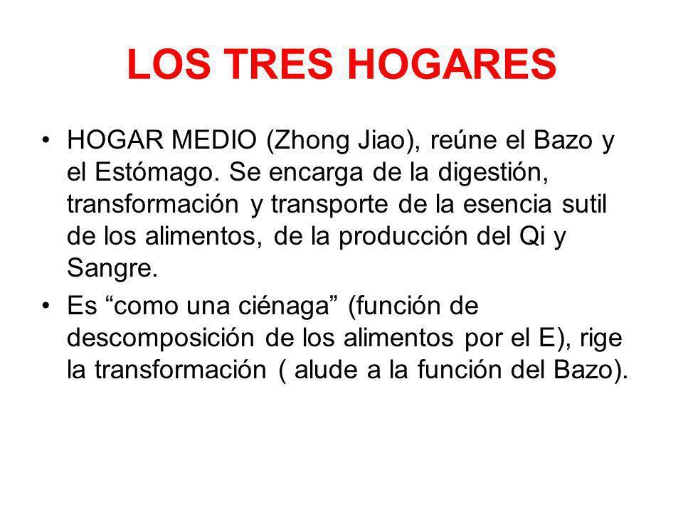 LOS TRES HOGARES HOGAR MEDIO (Zhong Jiao), reúne el Bazo y el Estómago. Se encarga de la digestión, transformación y transporte de la esencia sutil de
