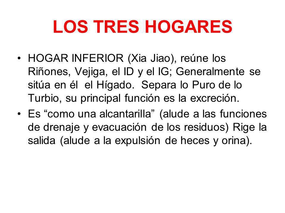 LOS TRES HOGARES HOGAR INFERIOR (Xia Jiao), reúne los Riñones, Vejiga, el ID y el IG; Generalmente se sitúa en él el Hígado. Separa lo Puro de lo Turb