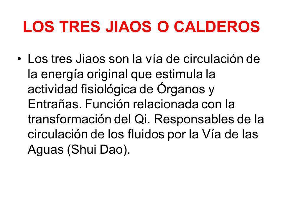 LOS TRES JIAOS O CALDEROS Los tres Jiaos son la vía de circulación de la energía original que estimula la actividad fisiológica de Órganos y Entrañas.