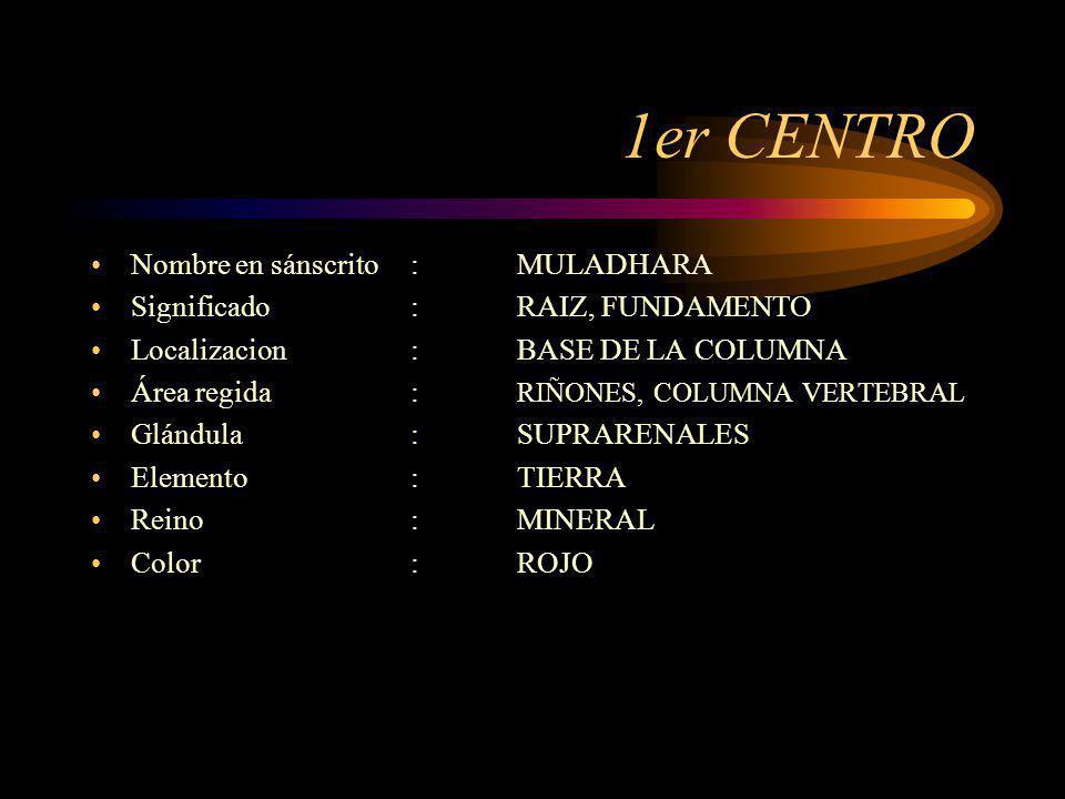 1er CENTRO Nombre en sánscrito:MULADHARA Significado:RAIZ, FUNDAMENTO Localizacion: BASE DE LA COLUMNA Área regida: RIÑONES, COLUMNA VERTEBRAL Glándul
