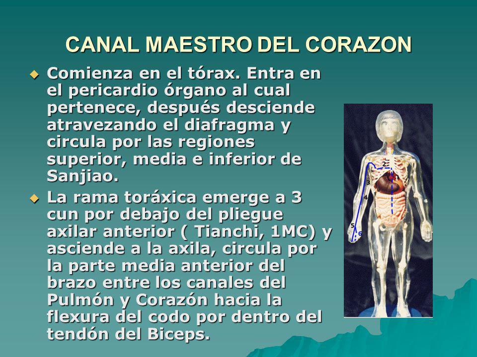 CANAL MAESTRO DEL CORAZON Comienza en el tórax. Entra en el pericardio órgano al cual pertenece, después desciende atravezando el diafragma y circula