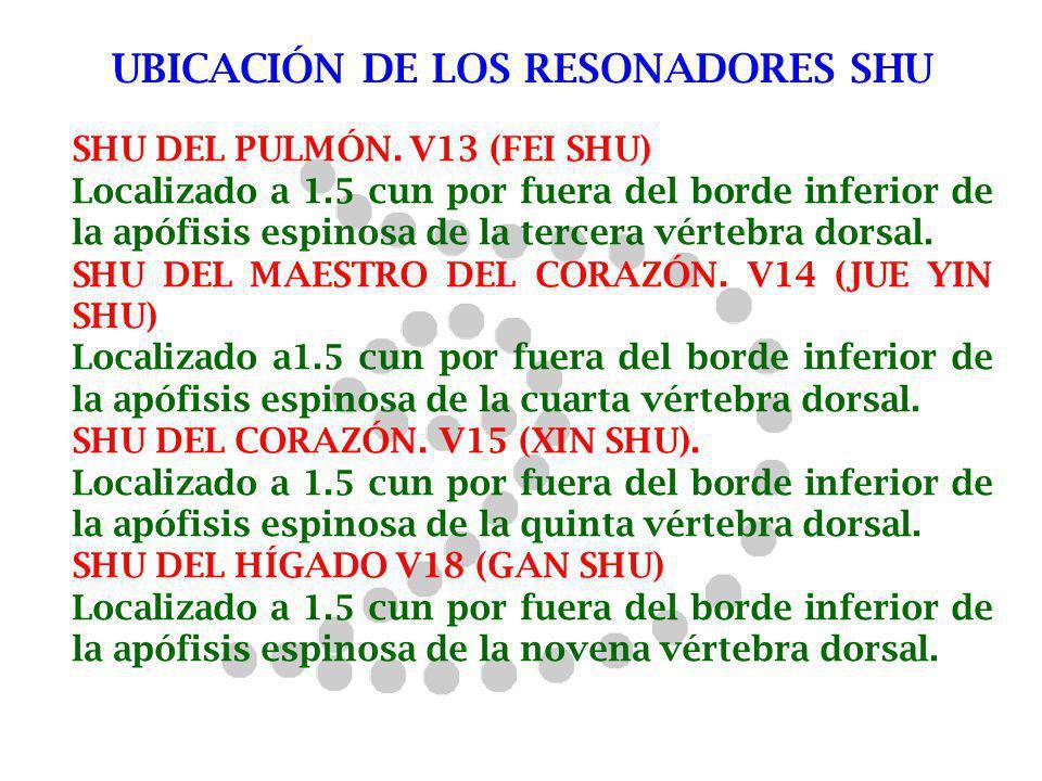 UBICACIÓN DE LOS RESONADORES SHU SHU DEL PULMÓN. V13 (FEI SHU) Localizado a 1.5 cun por fuera del borde inferior de la apófisis espinosa de la tercera