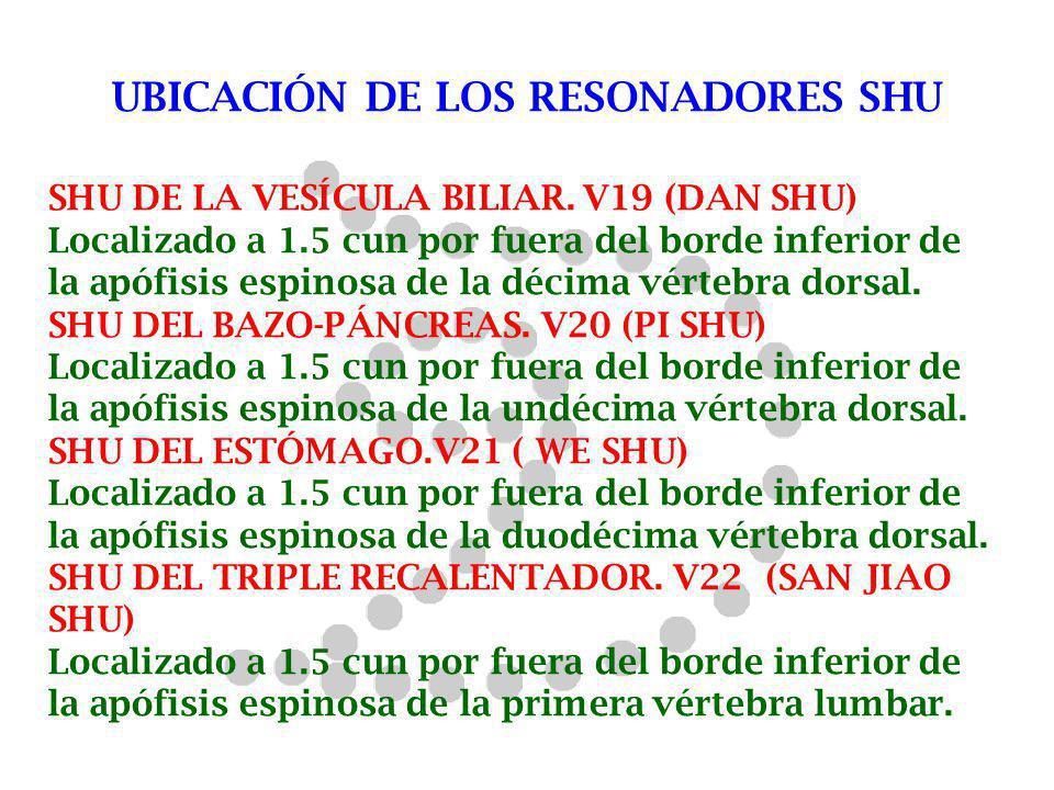 UBICACIÓN DE LOS RESONADORES SHU SHU DE LA VESÍCULA BILIAR. V19 (DAN SHU) Localizado a 1.5 cun por fuera del borde inferior de la apófisis espinosa de