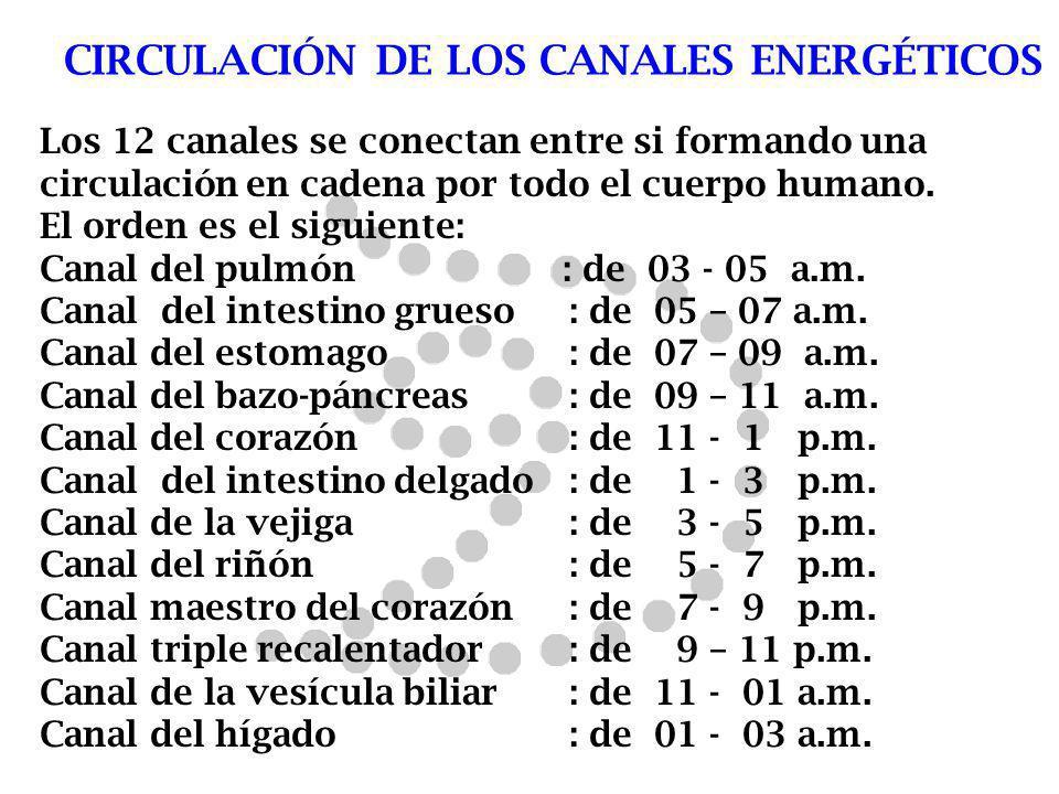 CIRCULACIÓN DE LOS CANALES ENERGÉTICOS Los 12 canales se conectan entre si formando una circulación en cadena por todo el cuerpo humano. El orden es e
