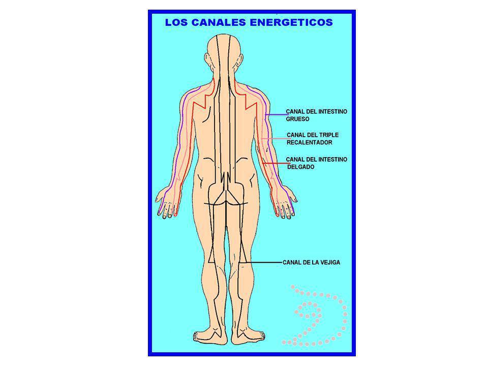 MÉTODOS PARA LA LOCALIZACIÓN DE LOS RESOANDORES Existen tres métodos para la localización de los resonadores: 1.- mediante las marcas anatómicas superficiales.