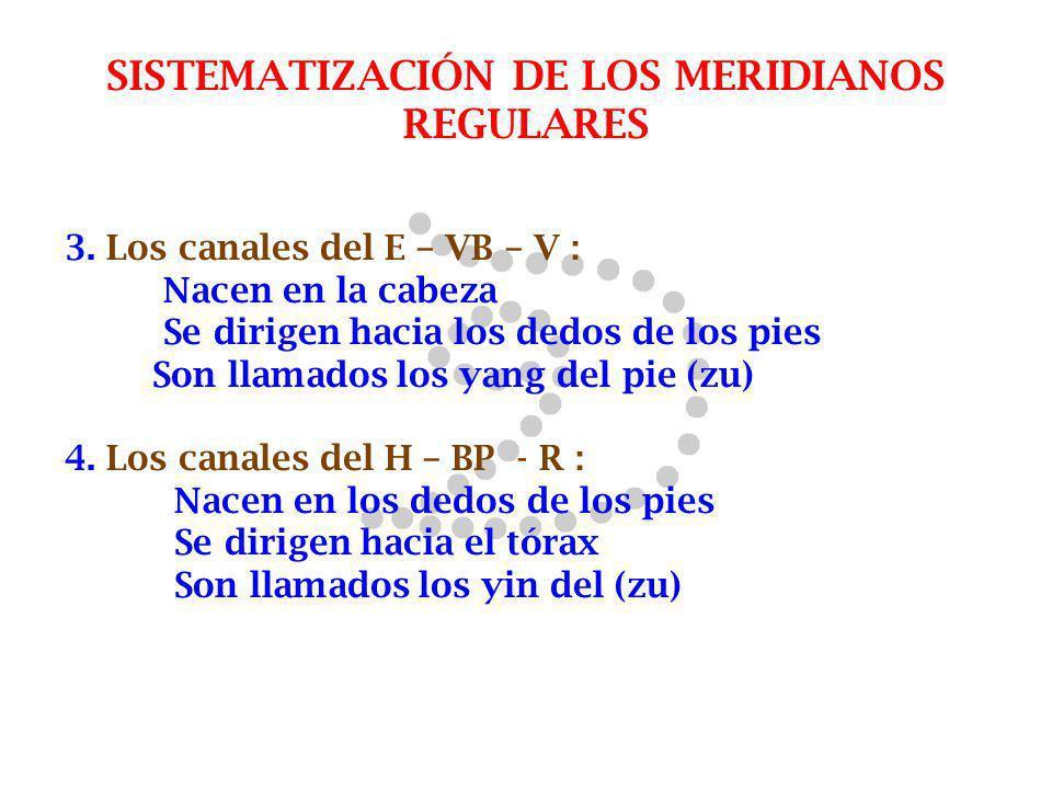 SISTEMATIZACIÓN DE LOS MERIDIANOS REGULARES 3. Los canales del E – VB – V : Nacen en la cabeza Se dirigen hacia los dedos de los pies Son llamados los