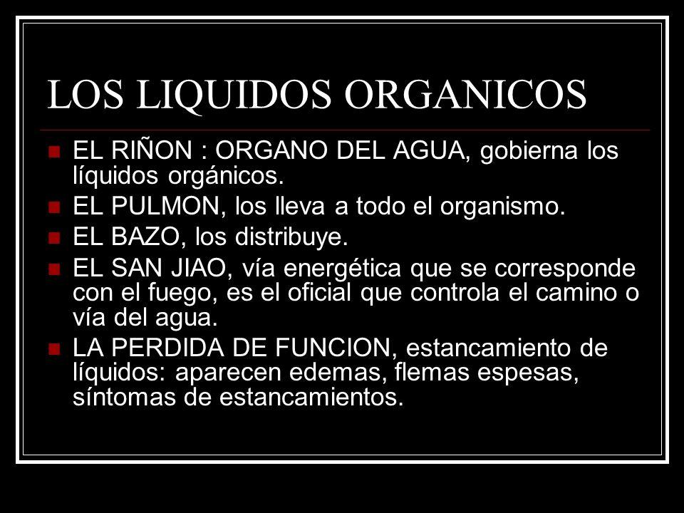 LOS LIQUIDOS ORGANICOS EL RIÑON : ORGANO DEL AGUA, gobierna los líquidos orgánicos. EL PULMON, los lleva a todo el organismo. EL BAZO, los distribuye.