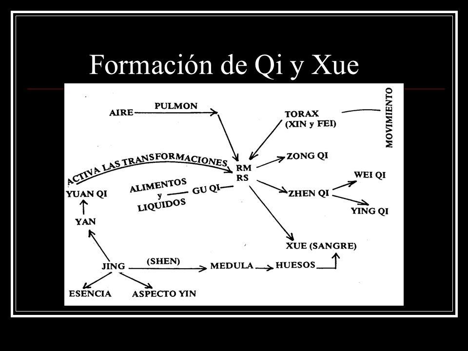 Formación de Qi y Xue