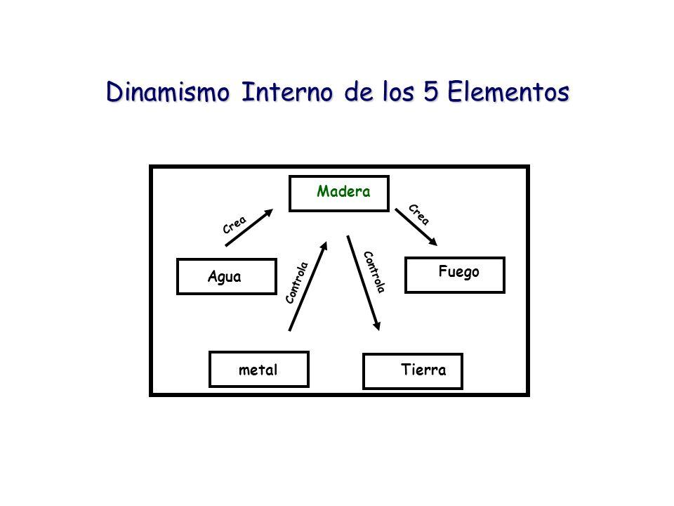 Dinamismo Interno de los 5 Elementos Madera Fuego Agua metalTierra Crea Controla Crea
