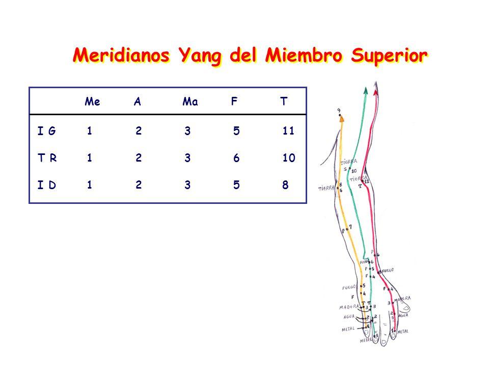 Meridianos Yang del Miembro Superior MeAMaFT I G123511 T R123610 I D12358