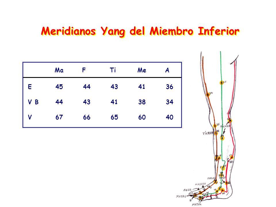 Meridianos Yang del Miembro Inferior MaFTiMeA E4544434136 V B4443413834 V6766656040