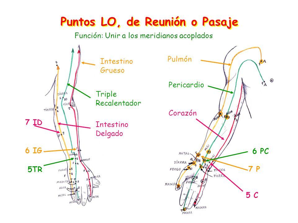 Puntos LO, de Reunión o Pasaje Pulmón Intestino Grueso 7 P 6 IG Pericardio Triple Recalentador Intestino Delgado 6 PC 5TR 5 C 7 ID Corazón Función: Unir a los meridianos acoplados