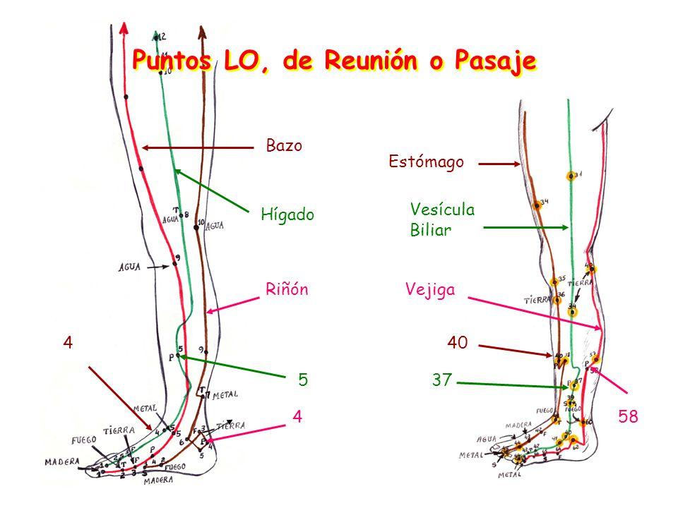 Puntos LO, de Reunión o Pasaje Vesícula Biliar Vejiga Hígado Riñón Bazo 40 375 4 584 Estómago