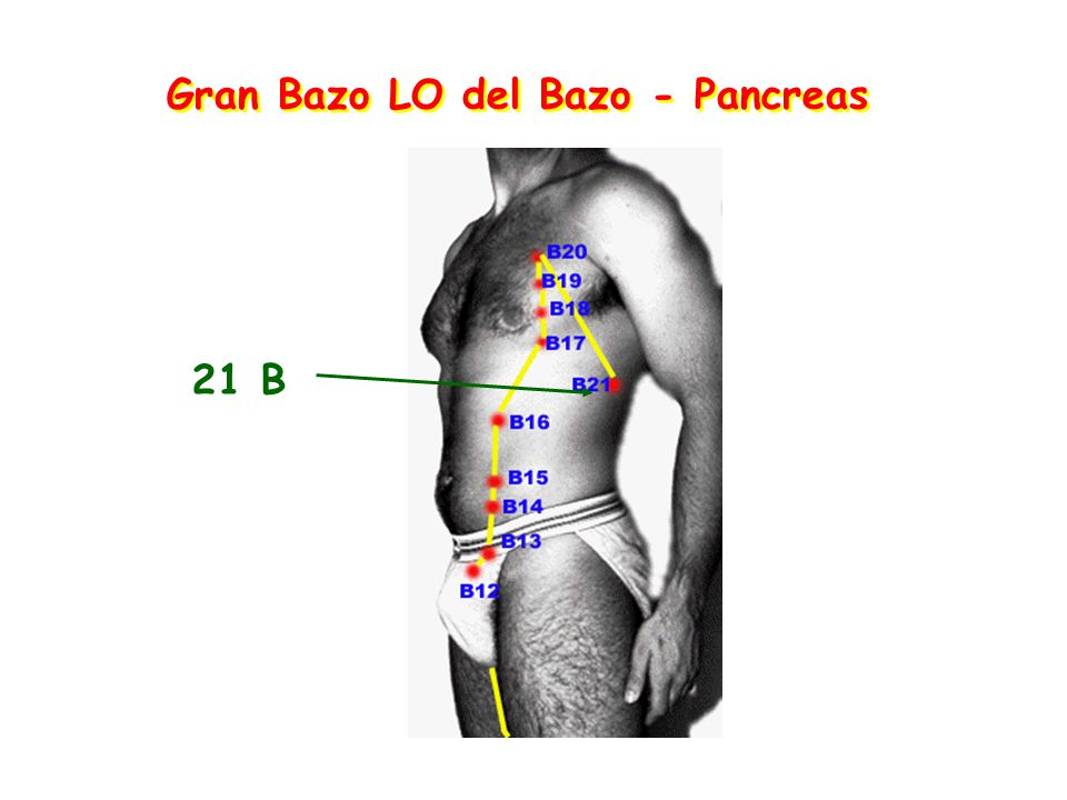 Gran Bazo LO del Bazo - Pancreas 21 B