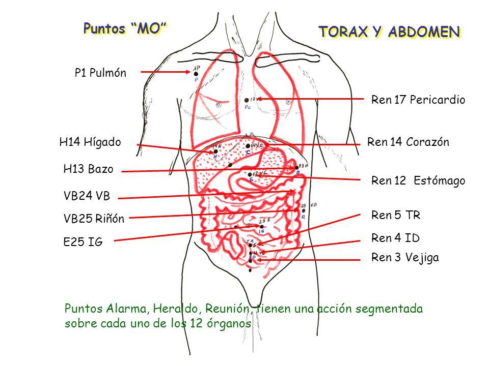 Puntos MO TORAX Y ABDOMEN P1 Pulmón Ren 17 Pericardio Ren 14 Corazón Ren 12 Estómago Ren 5 TR Ren 4 ID Ren 3 Vejiga H14 Hígado H13 Bazo VB24 VB VB25 Riñón E25 IG Puntos Alarma, Heraldo, Reunión, tienen una acción segmentada sobre cada uno de los 12 órganos