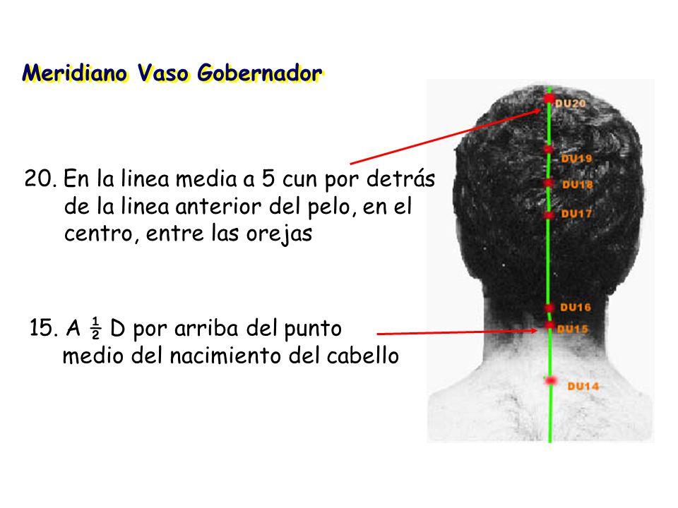 Meridiano Vaso Gobernador 15.A ½ D por arriba del punto medio del nacimiento del cabello 20.