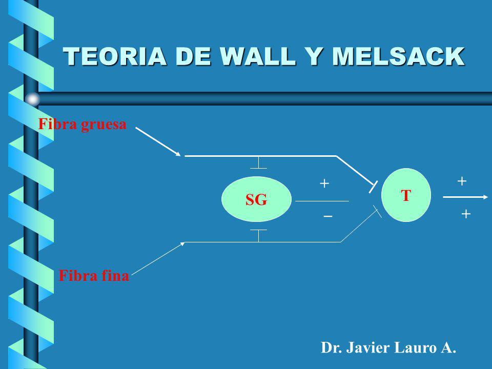 TEORIA DE WALL Y MELSACK Fibra gruesa Fibra fina SG T + _ + + Dr. Javier Lauro A.