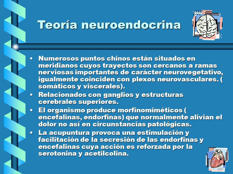 Teoría neuroendocrina Numerosos puntos chinos están situados en meridianos cuyos trayectos son cercanos a ramas nerviosas importantes de carácter neurovegetativo, igualmente coinciden con plexos neurovasculares.