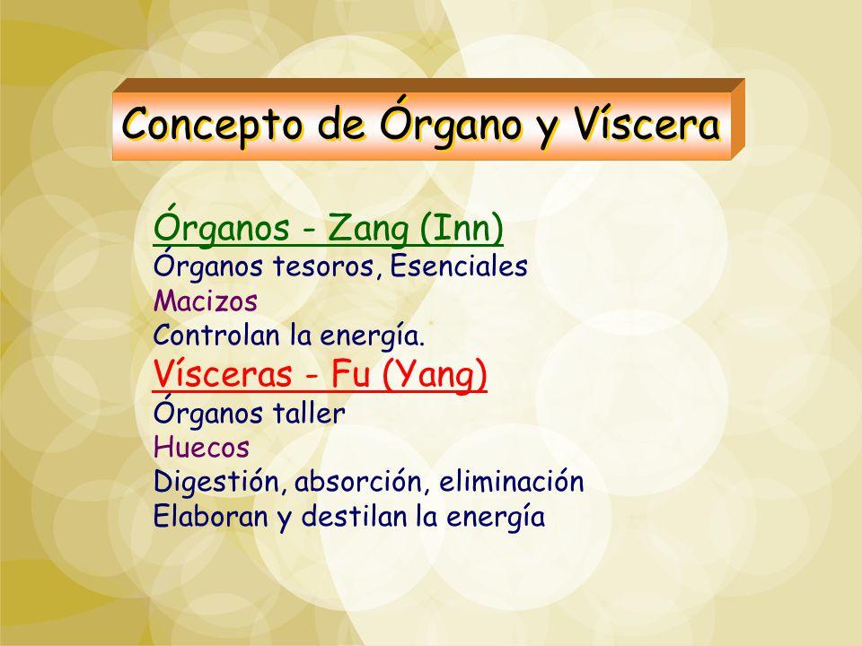 Órganos - Zang (Inn) Órganos tesoros, Esenciales Macizos Controlan la energía. Vísceras - Fu (Yang) Órganos taller Huecos Digestión, absorción, elimin