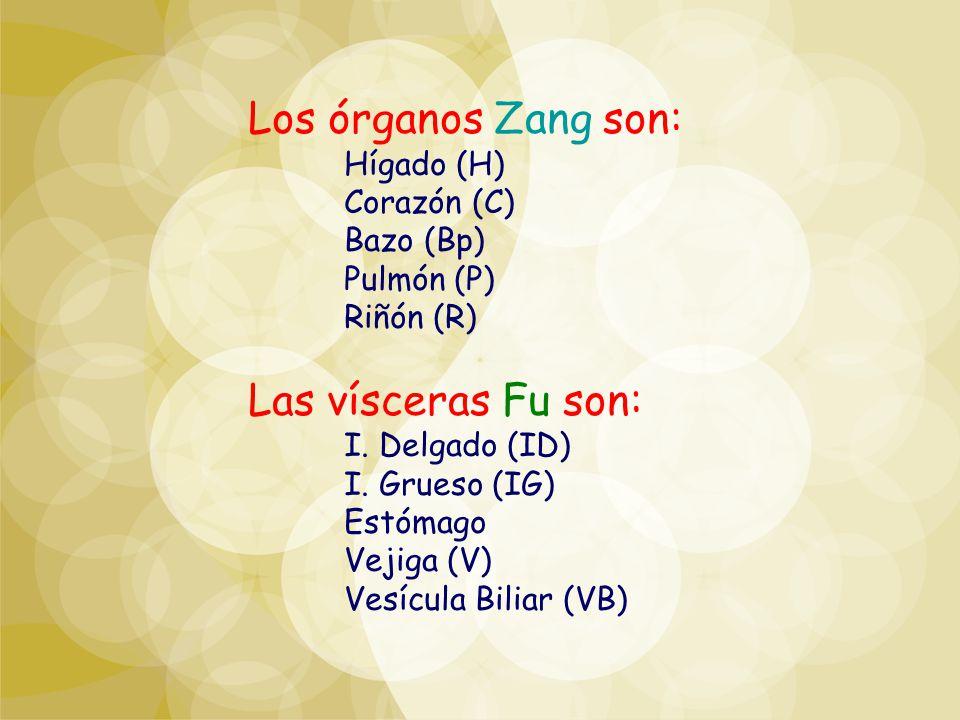 Los órganos Zang son: Hígado (H) Corazón (C) Bazo (Bp) Pulmón (P) Riñón (R) Las vísceras Fu son: I. Delgado (ID) I. Grueso (IG) Estómago Vejiga (V) Ve