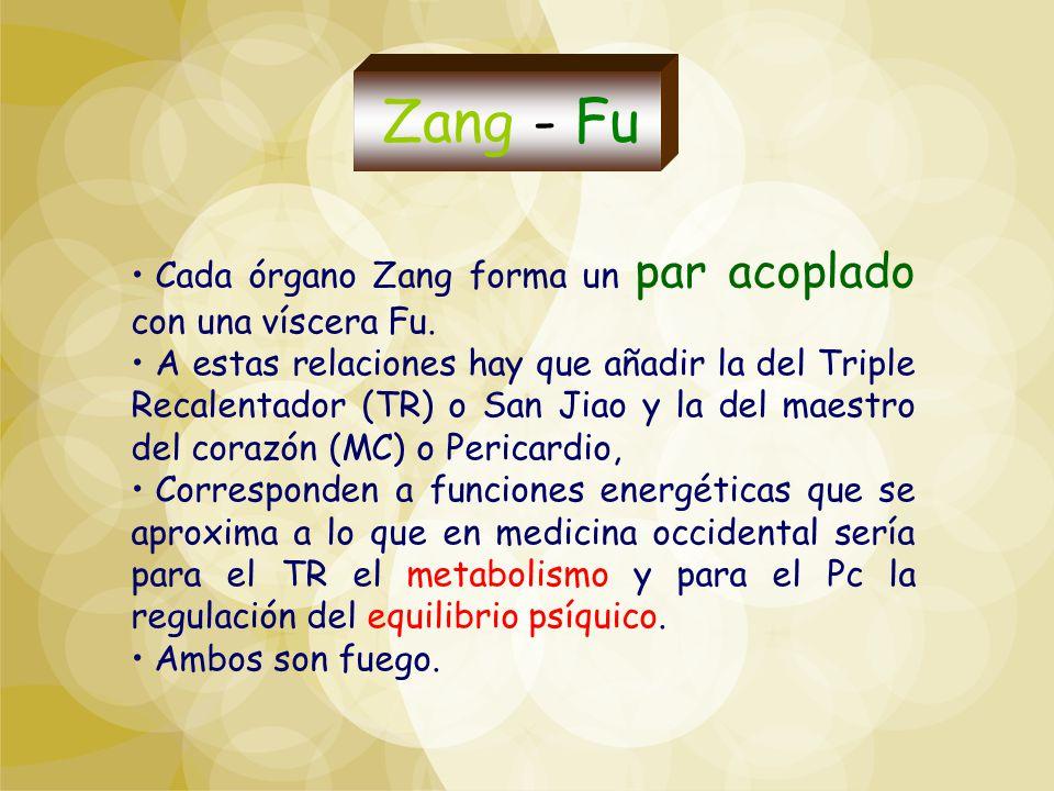 Cada órgano Zang forma un par acoplado con una víscera Fu. A estas relaciones hay que añadir la del Triple Recalentador (TR) o San Jiao y la del maest