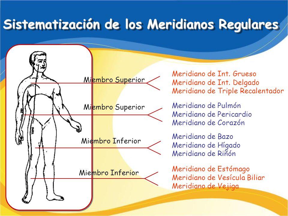 Sistematización de los Meridianos Regulares Meridiano de Int. Grueso Meridiano de Int. Delgado Meridiano de Triple Recalentador Meridiano de Pulmón Me