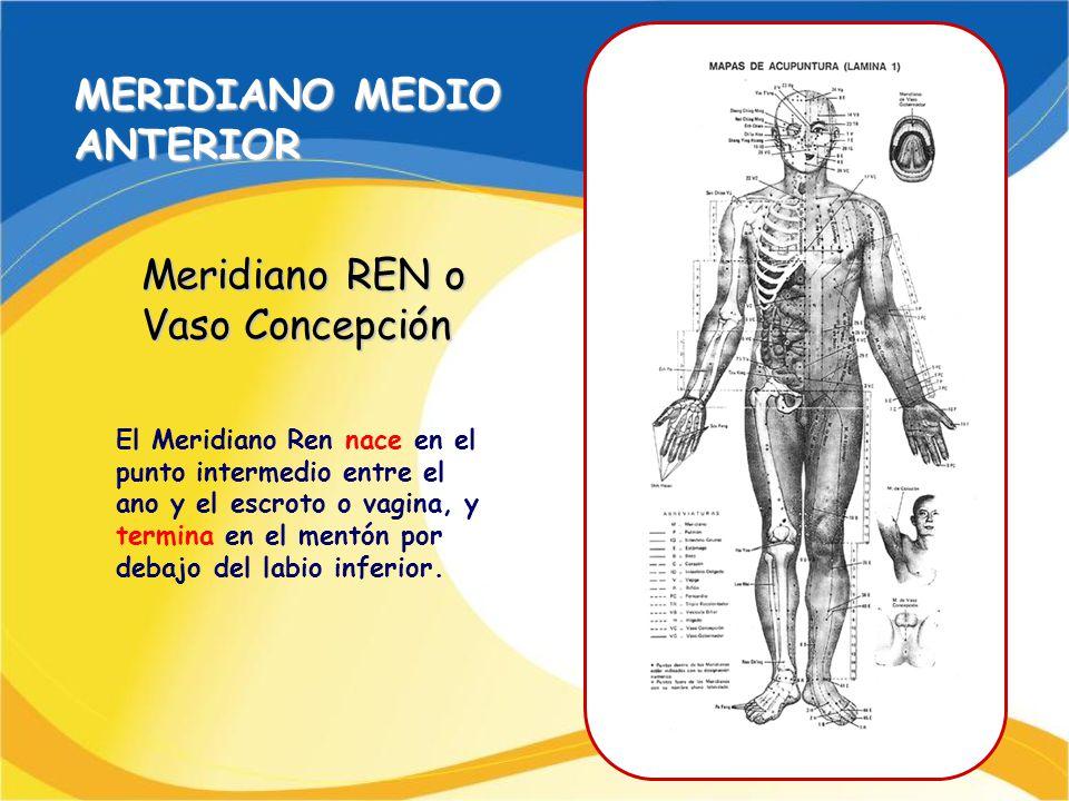 MERIDIANO MEDIO ANTERIOR Meridiano REN o Vaso Concepción El Meridiano Ren nace en el punto intermedio entre el ano y el escroto o vagina, y termina en