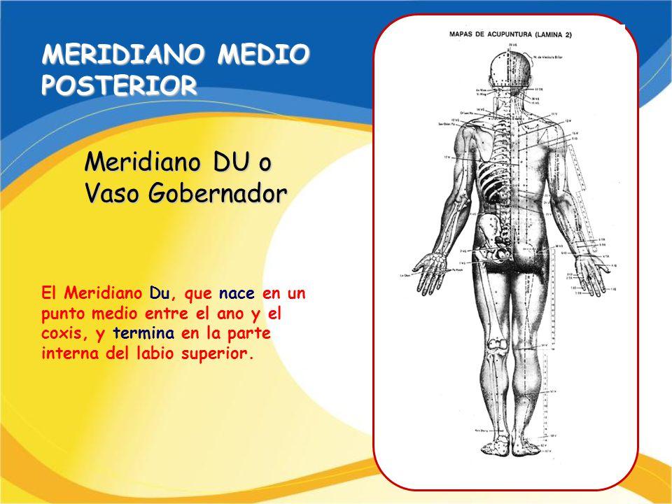 MERIDIANO MEDIO POSTERIOR Meridiano DU o Vaso Gobernador El Meridiano Du, que nace en un punto medio entre el ano y el coxis, y termina en la parte in