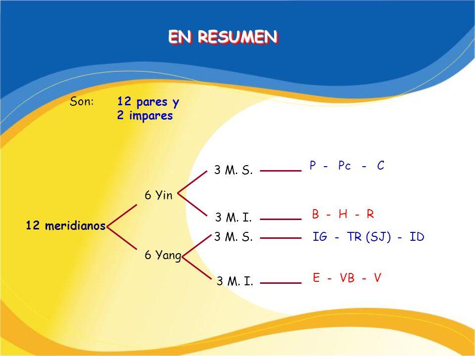 Son:12 pares y 2 impares 12 meridianos 6 Yin 6 Yang 3 M. S. 3 M. I. 3 M. S. 3 M. I. P - Pc - C B - H - R IG - TR (SJ) - ID E - VB - V EN RESUMEN EN RE