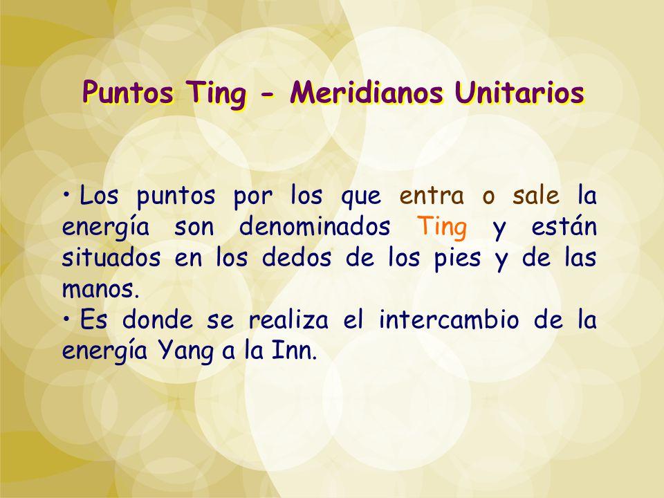 Puntos Ting - Meridianos Unitarios Los puntos por los que entra o sale la energía son denominados Ting y están situados en los dedos de los pies y de