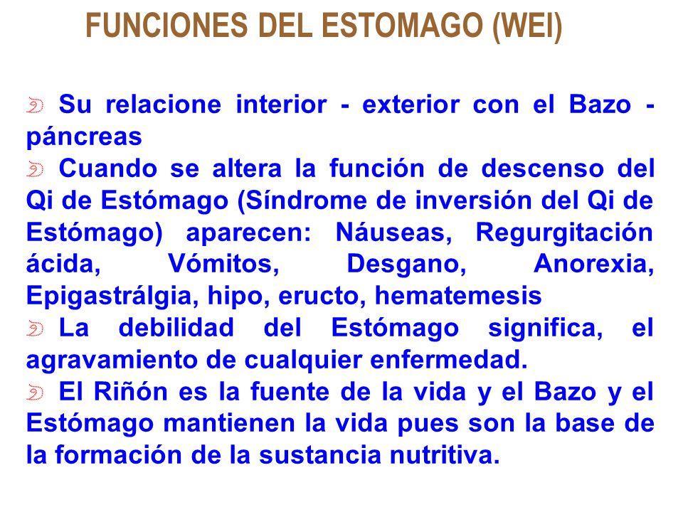 FUNCIONES DEL ESTOMAGO (WEI) Su relacione interior - exterior con el Bazo - páncreas Cuando se altera la función de descenso del Qi de Estómago (Síndr