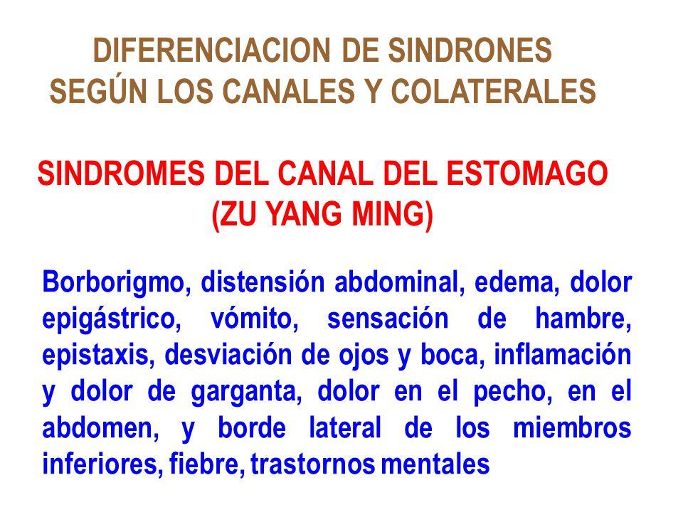 DIFERENCIACION DE SINDRONES SEGÚN LOS CANALES Y COLATERALES SINDROMES DEL CANAL DEL ESTOMAGO (ZU YANG MING) Borborigmo, distensión abdominal, edema, d