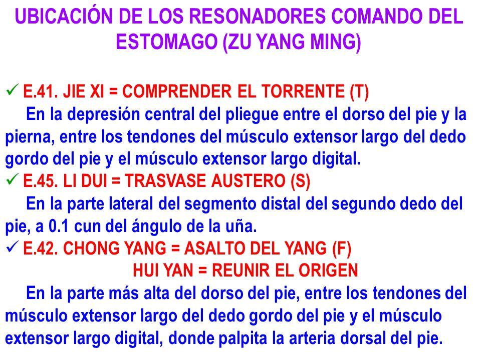 UBICACIÓN DE LOS RESONADORES COMANDO DEL ESTOMAGO (ZU YANG MING) E.41. JIE XI = COMPRENDER EL TORRENTE (T) En la depresión central del pliegue entre e