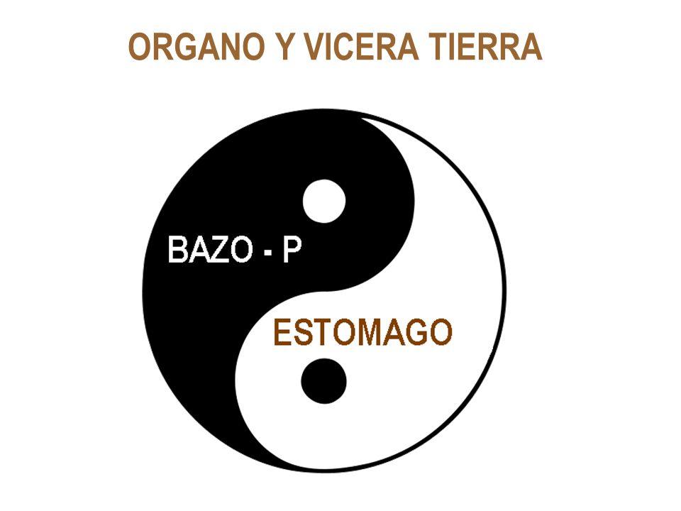 ORGANO Y VICERA TIERRA