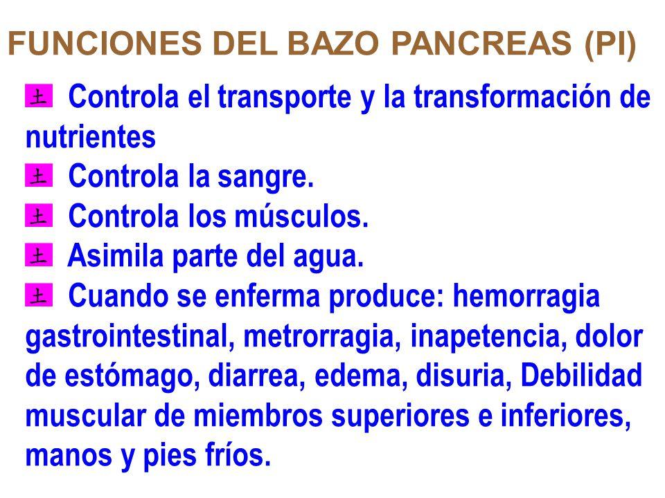 FUNCIONES DEL BAZO PANCREAS (PI) Controla el transporte y la transformación de nutrientes Controla la sangre. Controla los músculos. Asimila parte del