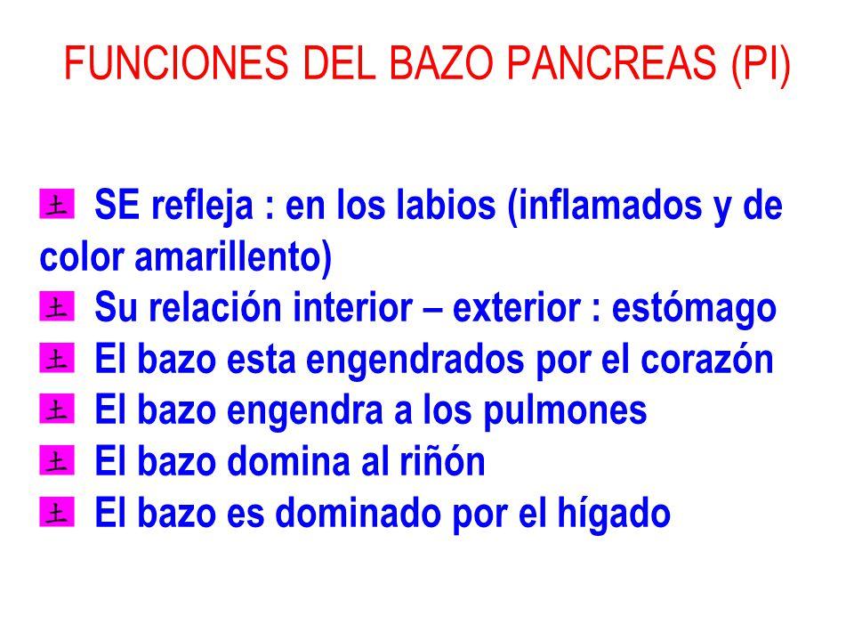 FUNCIONES DEL BAZO PANCREAS (PI) SE refleja : en los labios (inflamados y de color amarillento) Su relación interior – exterior : estómago El bazo est