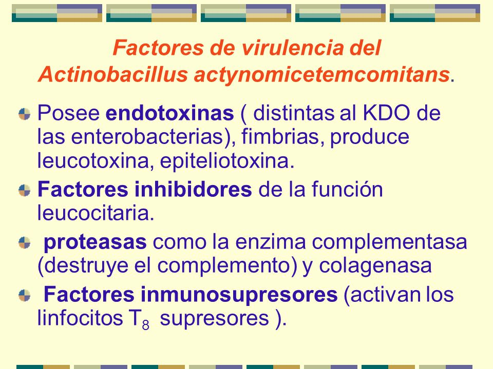 Factores de virulencia del Actinobacillus actynomicetemcomitans. Posee endotoxinas ( distintas al KDO de las enterobacterias), fimbrias, produce leuco