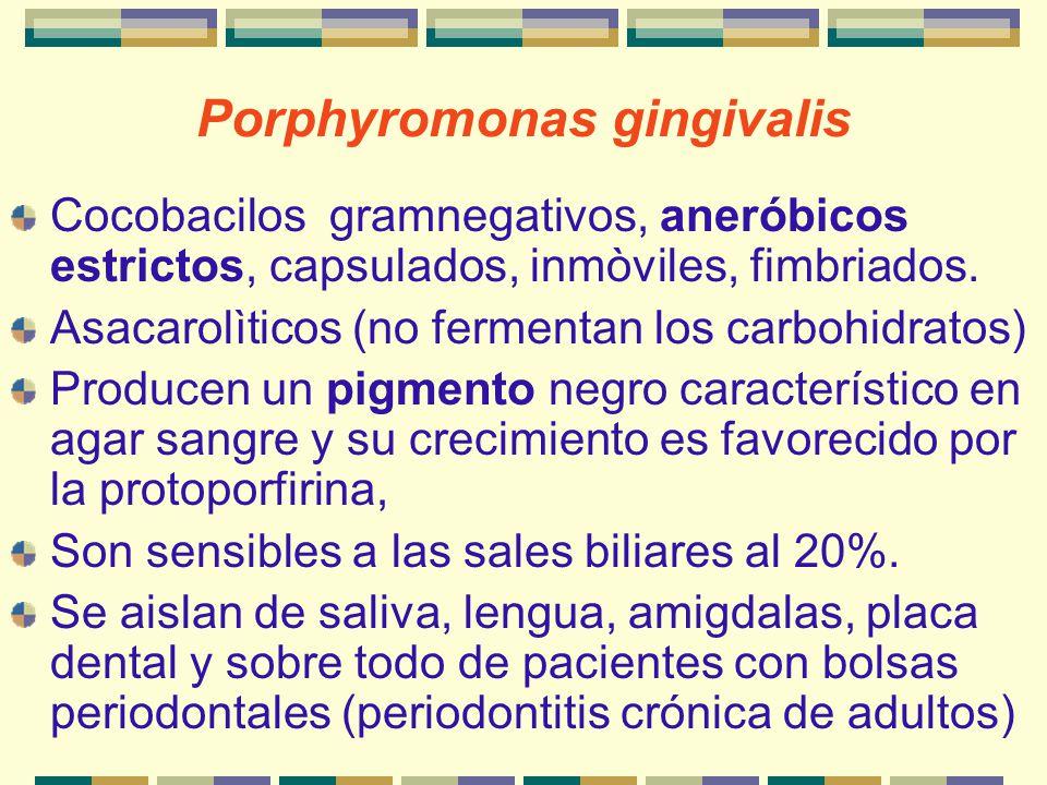 Porphyromonas gingivalis Cocobacilos gramnegativos, aneróbicos estrictos, capsulados, inmòviles, fimbriados. Asacarolìticos (no fermentan los carbohid