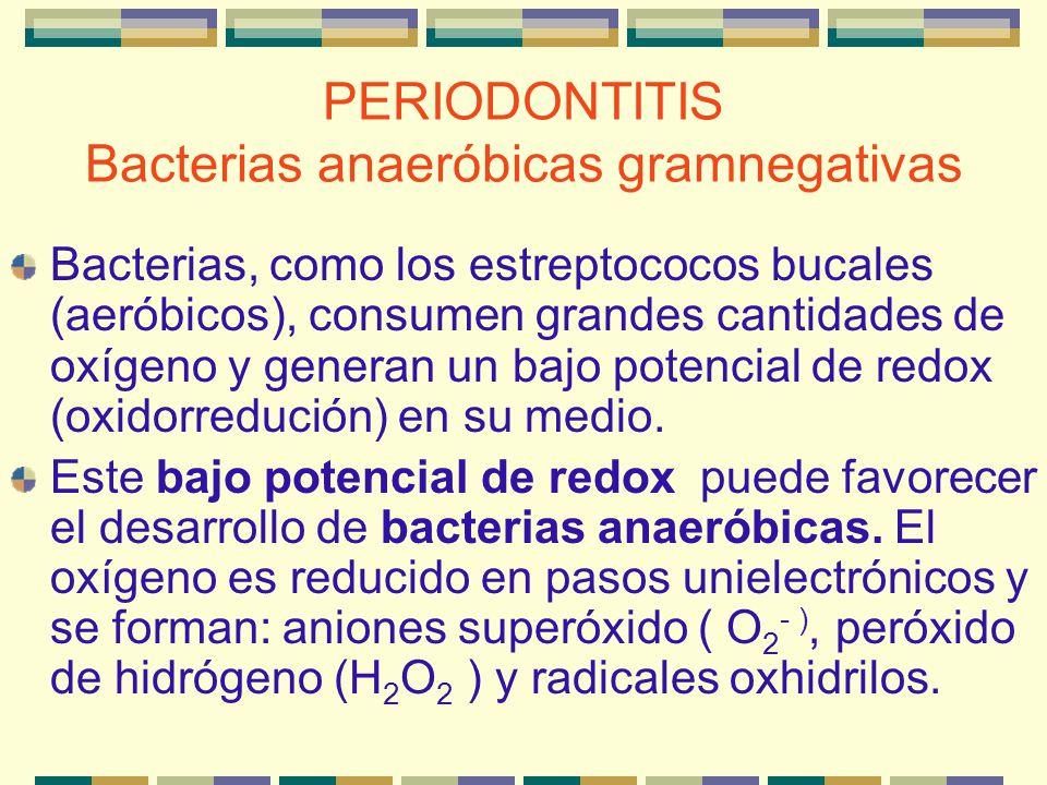PERIODONTITIS Bacterias anaeróbicas gramnegativas Bacterias, como los estreptococos bucales (aeróbicos), consumen grandes cantidades de oxígeno y gene